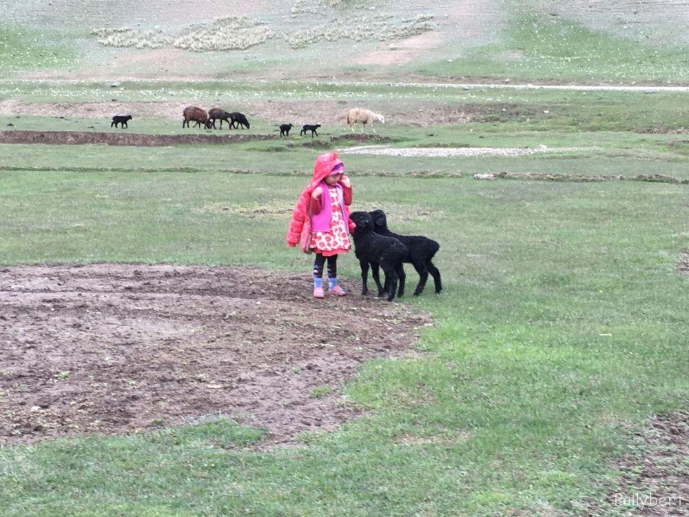 local child with lambs @Tash Rabat