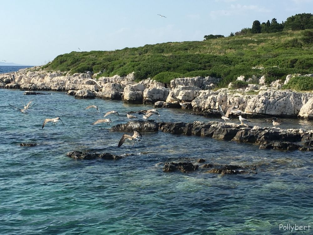 Arriving in Paxos